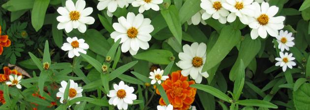 Dios recoge sus flores