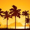 El sueño de las palmeras