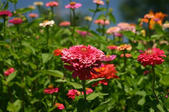 Dios me alegró con bellísimas flores multicolor