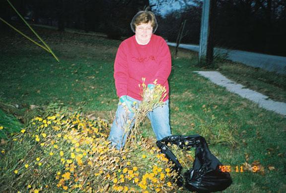 Recogí decenas de miles de capullos con semillas