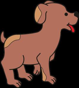 cachorro 5 co
