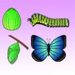 Mariposa todo